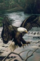 20070102094548_wildlife_mural